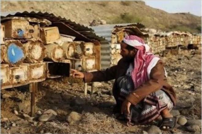 yemen-culture-miel (2)