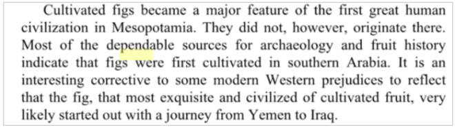 fig-yemen
